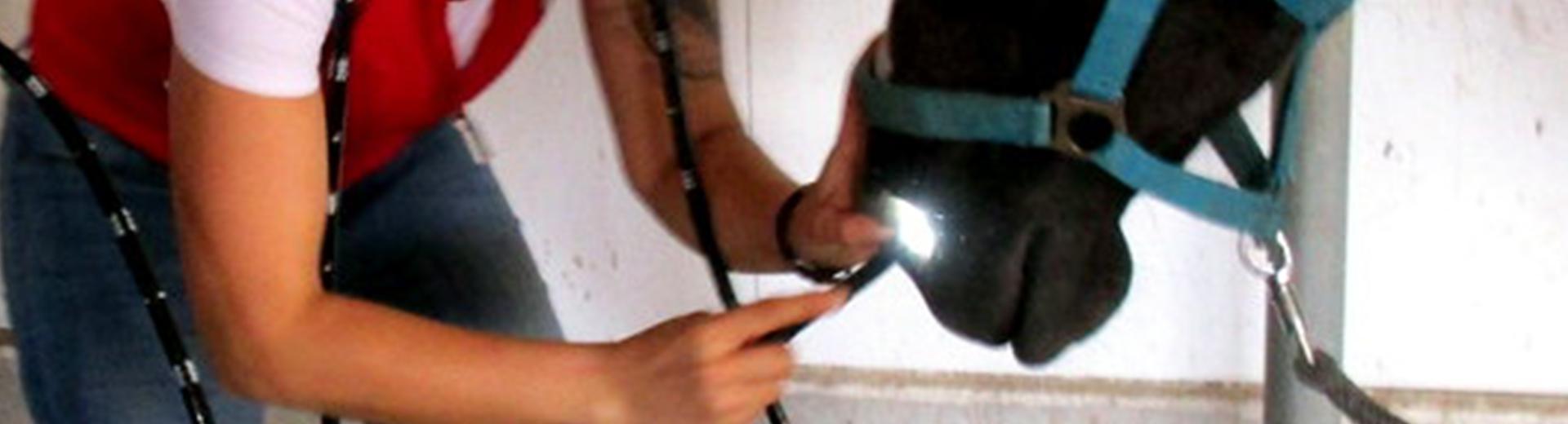 Mobiles Gastroskop
